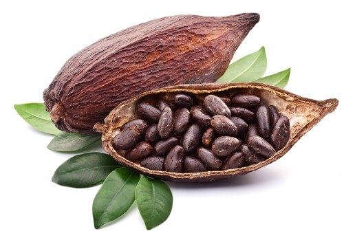 cocoa_beans2_500